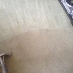 Carpet-Cleaning-Lynnwood