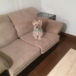 Lynnwood-Sofa-Pet-Stain-Cleaning