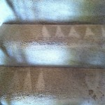 Lynnwood-Stairs-Carpet-Cleaning
