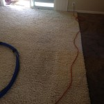 Lynnwood-Traffic-Area-carpet-cleaners